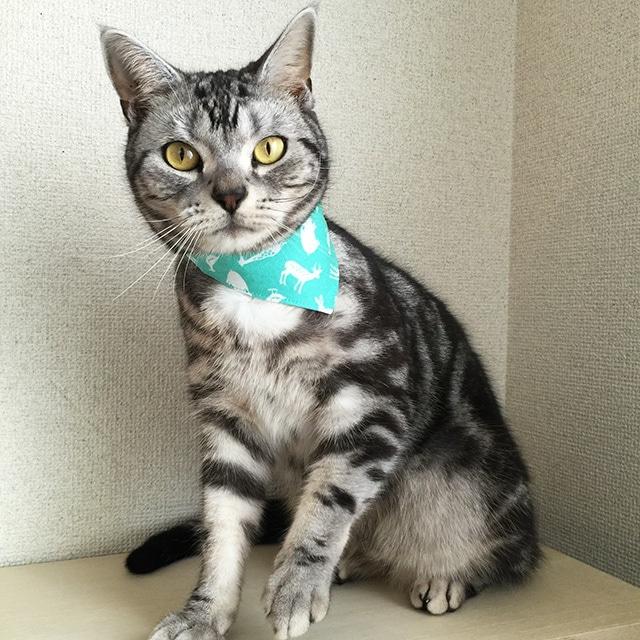 【アニマル柄ライトグリーン】猫用バンダナ風首輪/選べるアジャスター 猫首輪 安全首輪 子猫から成猫