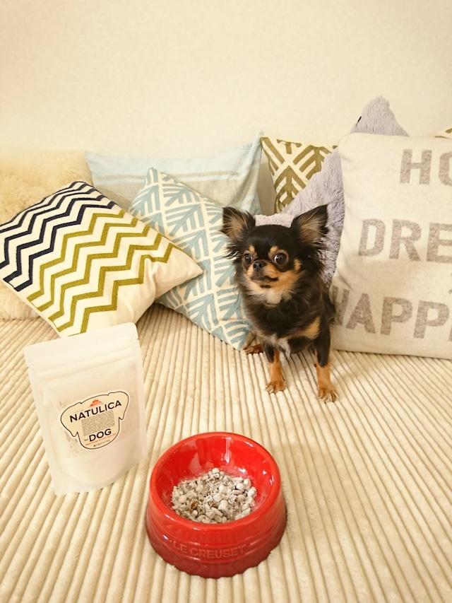 ナチュリカ for ドッグス 愛犬のためのスーパーフード「食べるケイソウ土  NATULICA®️ (ナチュリカ)」= NATURAL(自然な、天然の) + SILICA(シリカ) 限定先行新発売!【送料無料】