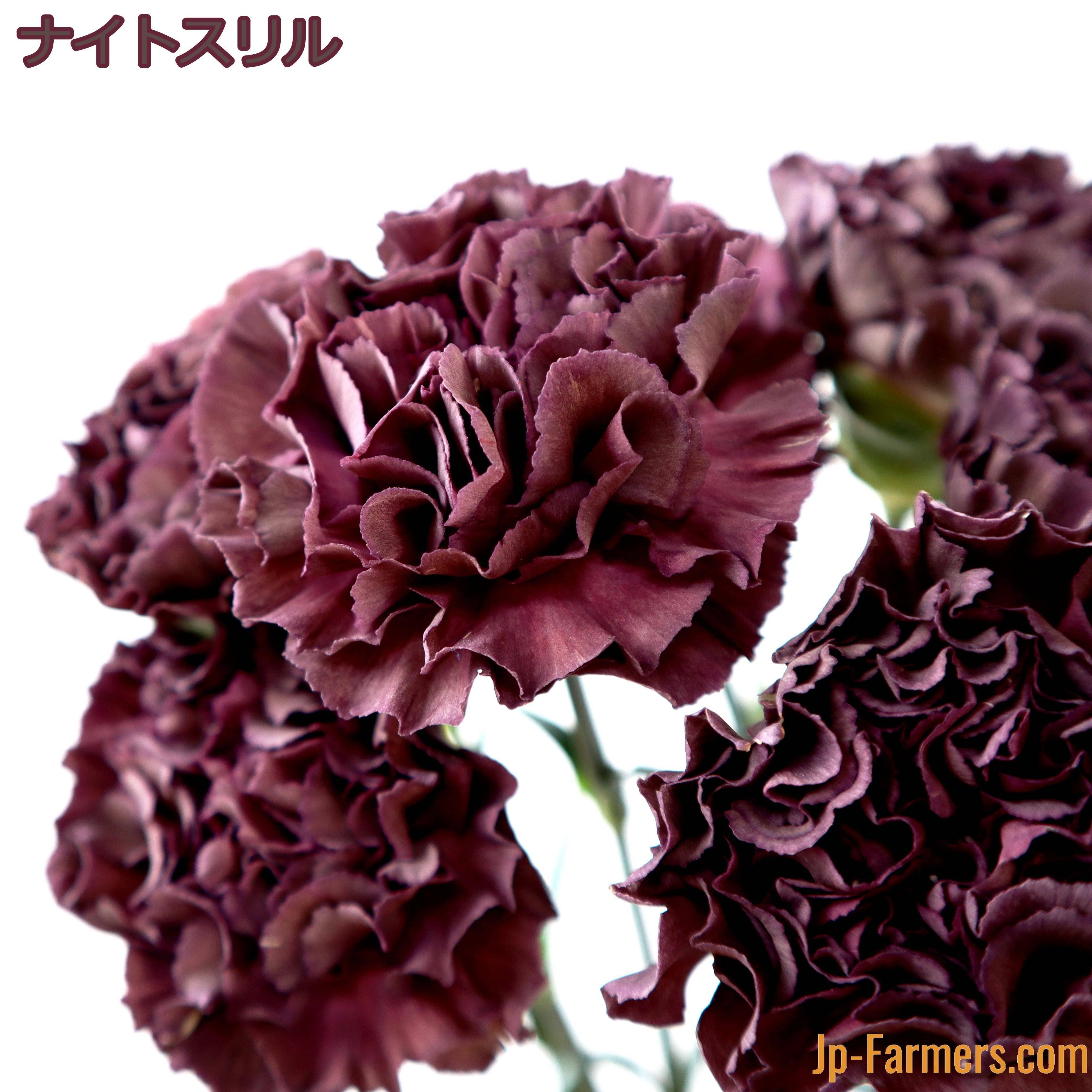 季節限定 とてもシックで妖艶なカラーリングのカーネーション 10本(計5品種)