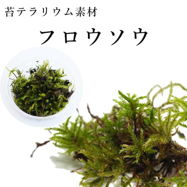 フロウソウ 苔テラリウム作製用素材苔