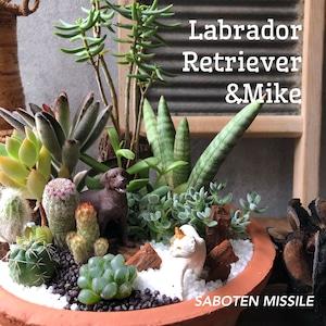 Labrador retriever & MIKE