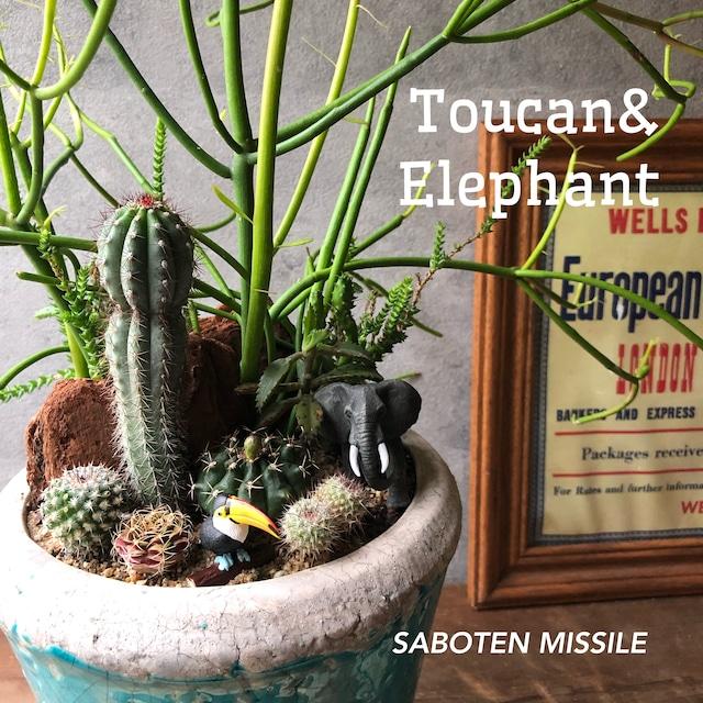 Toucan&  Elephant