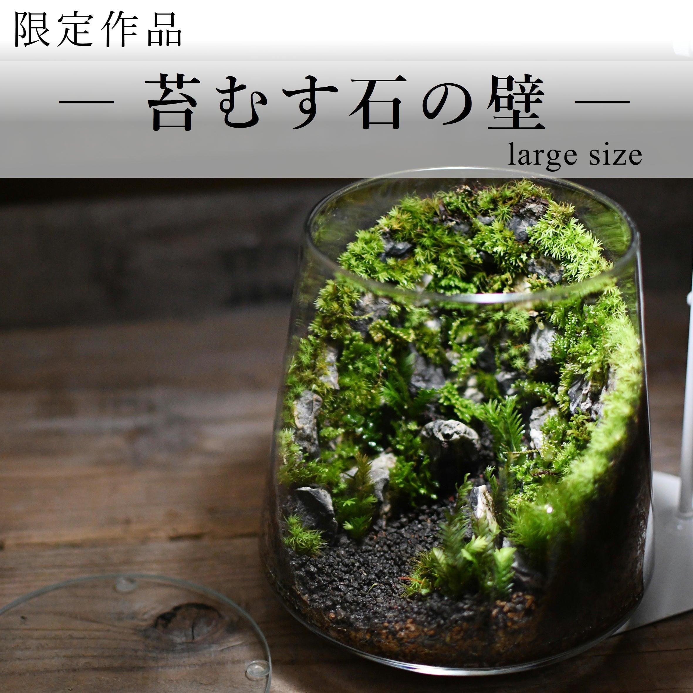 苔景−苔むす石の壁 large size −【苔テラリウム・現物限定販売】