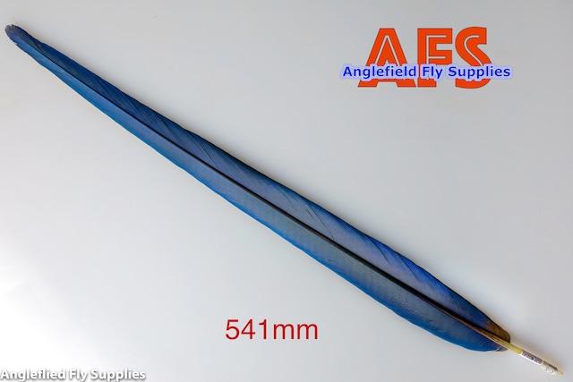 Blue-Gold Macaw Center Tails (BGMC2) / マコー センターテール