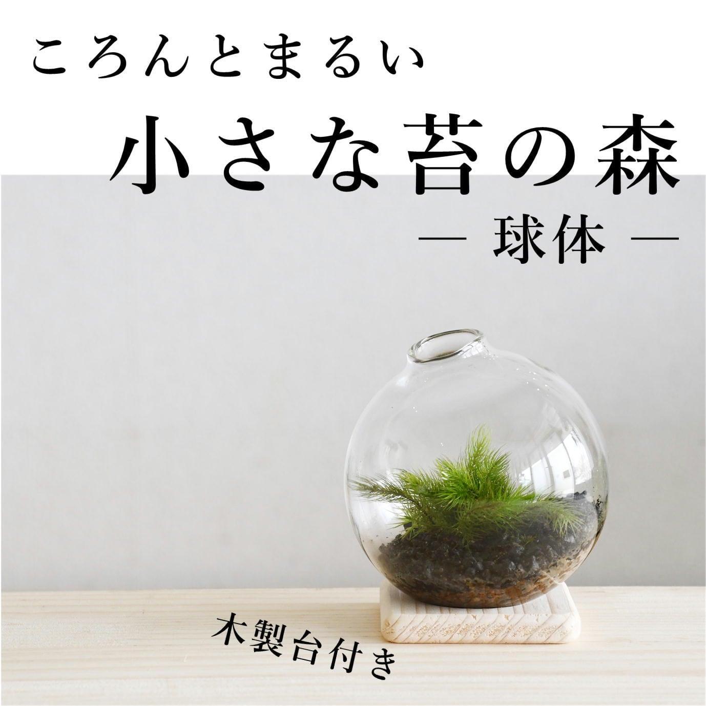 【ころんとまるい 苔テラリウム】小さな苔の森 球体(木製台付き)