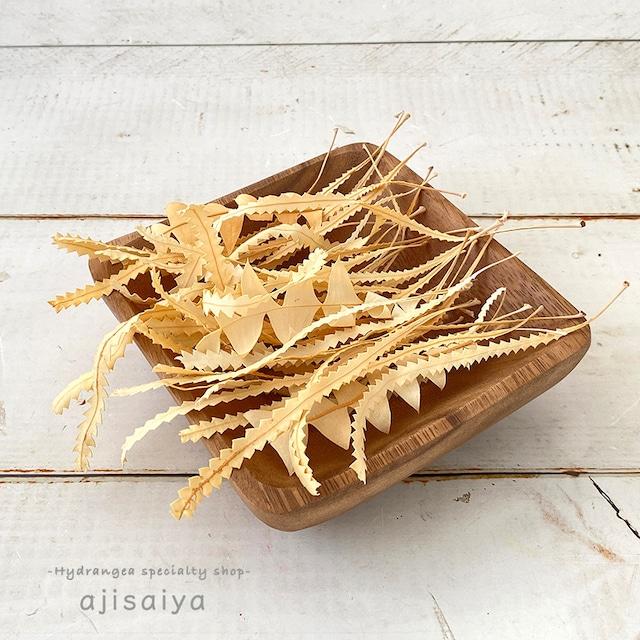 バンクシアの葉っぱアソートの袋詰め サラシ加工 【オフホワイト】