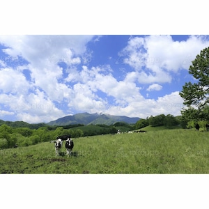 夏の八千代牧場