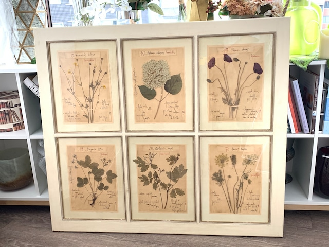 6種のハーバリウム(植物標本)アート・アイボリーフレーム