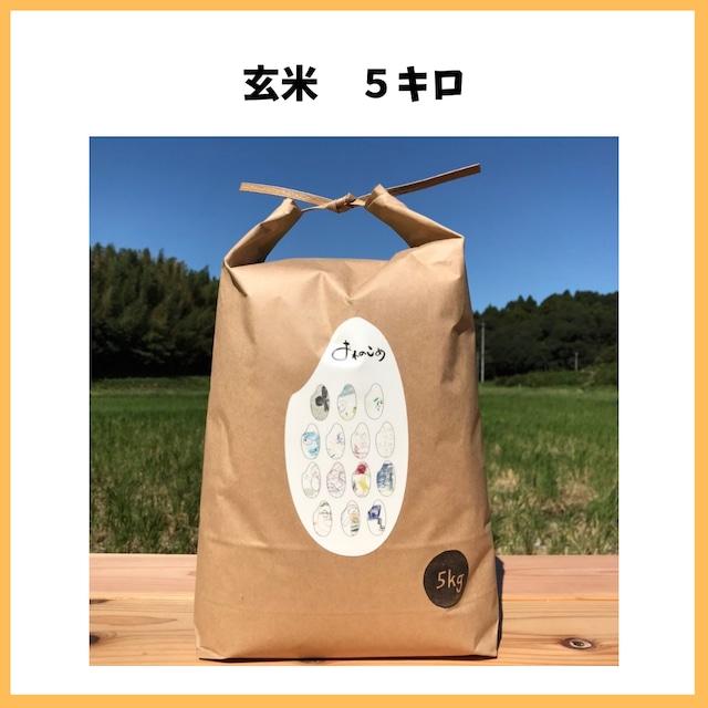 農薬も化学肥料も使わないで育てたお米【玄米 5kg】