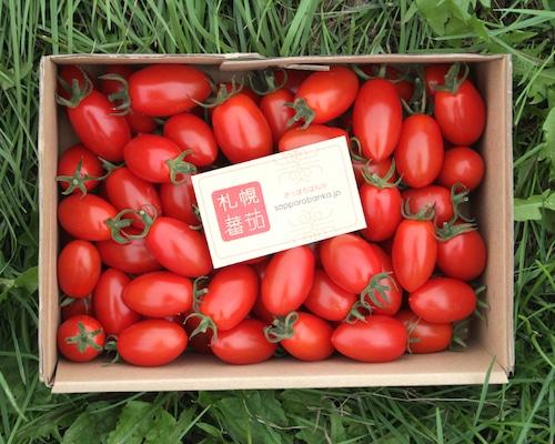 札幌蕃茄(アイコ)2kg