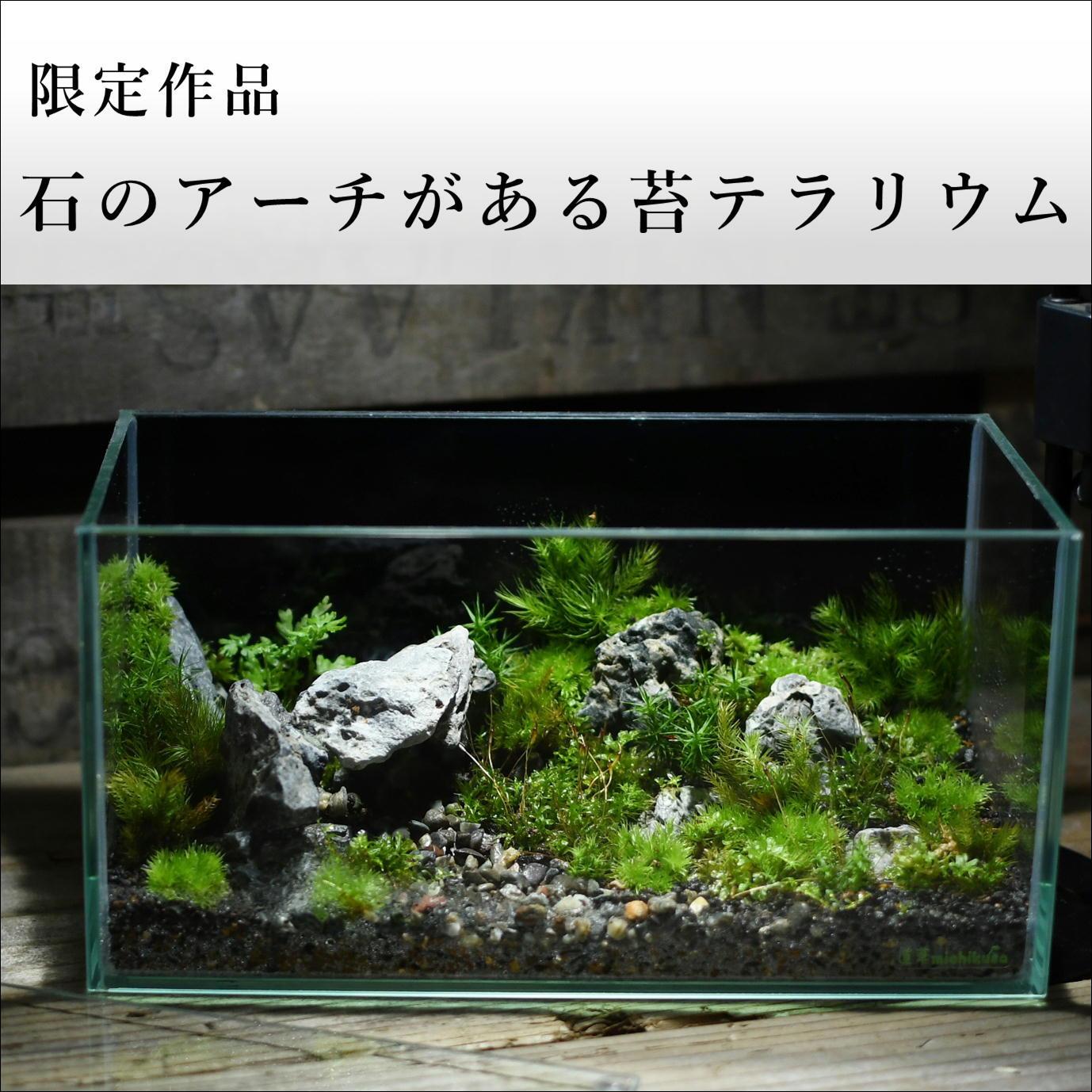 苔景−石のアーチがある苔テラリウム −【苔テラリウム・現物限定販売】2021.10.3#1