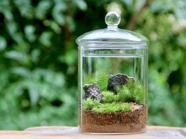 苔の森_Hakoniwa L《苔テラリウム・コケリウム》