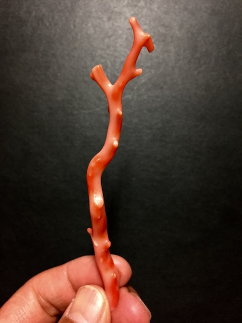2) 赤サンゴ