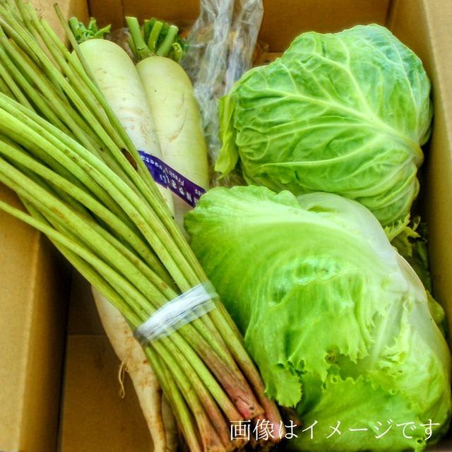 送料無料 6月の朝採り直売野菜セット およそ8点セット 毎週土曜日発送予定  【冷蔵便】