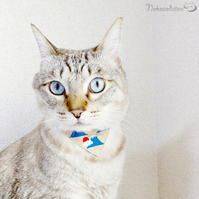 【富士山柄】まじめな首輪・バンダナ風/選べるアジャスター 猫首輪 安全首輪 子猫から成猫