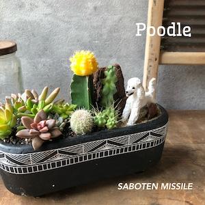 Poodle プードル