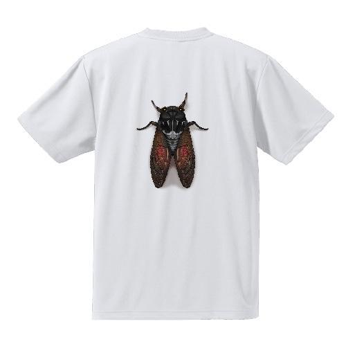 蝉TシャツC