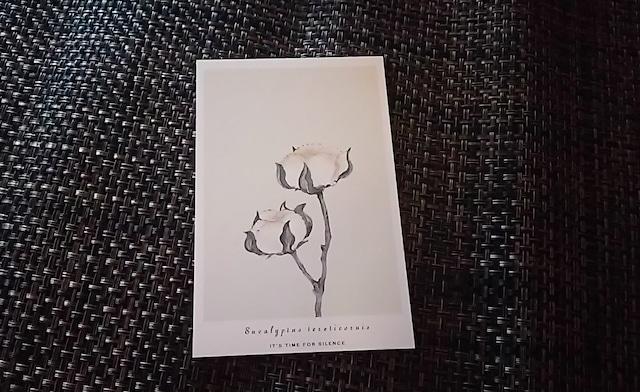植物 ポストカード R