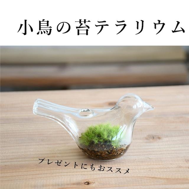 【苔の贈り物】 小さな苔の森 小鳥