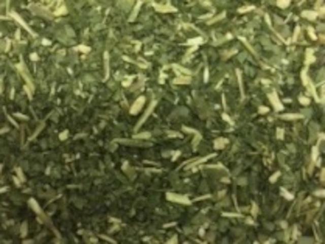 【ミネラルたっぷり!特別価格】モリンガ茶