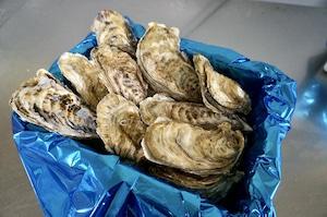 昆布の森の牡蠣『北海道仙鳳趾産 殻付き牡蠣』Lサイズ(200g以上/個) 小箱(約20個)