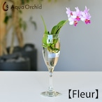 Aqua orchid 【フルール】