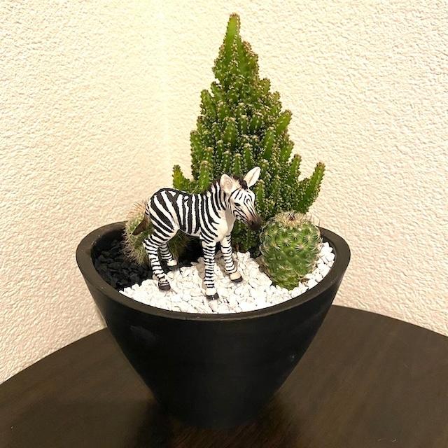 【受注生産品】しまうま sa03jb サボテン 観葉植物 シマウマ アフリカ サバンナ インテリア グリーン ミニチュア かわいい 動物 フィギュア
