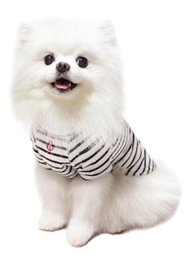 犬の生活 16SS ボーダーラグランTシャツ