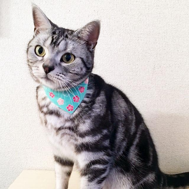 【桜一重八重柄】猫用バンダナ風首輪/選べるアジャスター 猫首輪 安全首輪 子猫から成猫