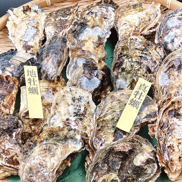 【真牡蠣】×【地牡蠣】食べ比べセット 天草産(生食用)道の駅上天草さんぱーる【熊本】