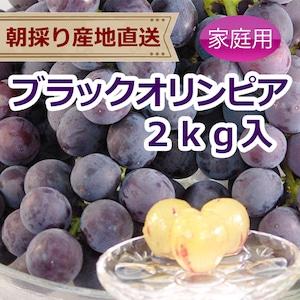 ブラックオリンピア 2kg(家庭用ぶどう)