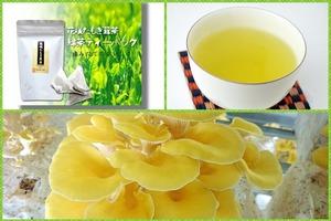 熊本県産あさぎり町「花咲たもぎ茸茶」ティーバッグ(緑茶)【送料無料】